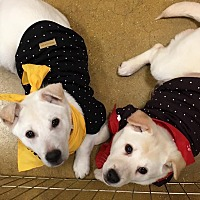 Adopt A Pet :: Magic Mike - Smithtown, NY