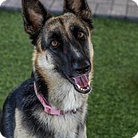 Adopt A Pet :: Cara - Phoenix, AZ