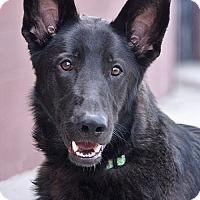 Adopt A Pet :: Richie von Sambora - Los Angeles, CA
