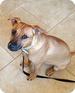 Shepherd (Unknown Type)/Hound (Unknown Type) Mix Puppy for adoption in Phoenix, Arizona - Aubrey