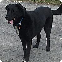Adopt A Pet :: Joy (Courtesy Post) - Upper Sandusky, OH