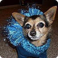 Adopt A Pet :: Allie - Cleveland, OH