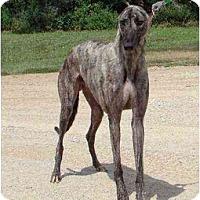 Adopt A Pet :: Matthew - Chagrin Falls, OH