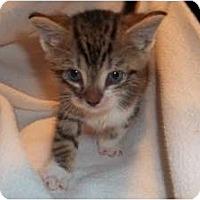 Adopt A Pet :: Jagger - Acme, PA