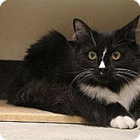 Adopt A Pet :: Pecan - Chesapeake, VA