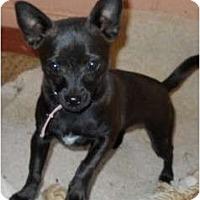 Adopt A Pet :: Opal - dewey, AZ