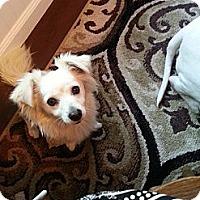 Adopt A Pet :: Hannah - Norwalk, CA