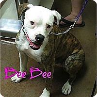 Adopt A Pet :: Bee bee - Scottsdale, AZ