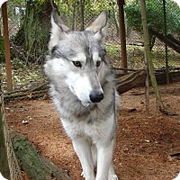 Adopt A Pet :: Lexi - Ashland, OR