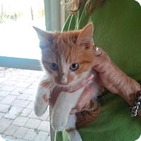 Adopt A Pet :: Lucy - Ft. Lauderdale, FL