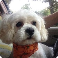 Adopt A Pet :: Sookie - Conway, AR
