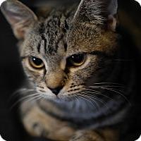 Adopt A Pet :: Doby - N. Billerica, MA
