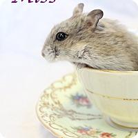 Adopt A Pet :: Miss - Bradenton, FL