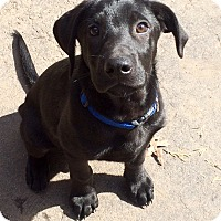 Adopt A Pet :: Travis in CT - Manchester, CT
