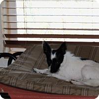 Adopt A Pet :: Buster - Apache Junction, AZ