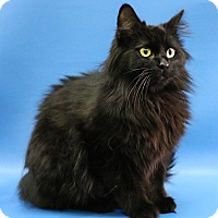 Adopt A Pet :: Georgie - Overland Park, KS