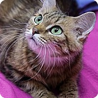 Adopt A Pet :: Verona - Chicago, IL