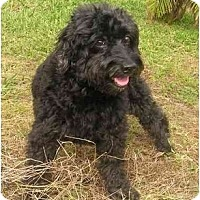 Adopt A Pet :: Ty - Gulfport, FL