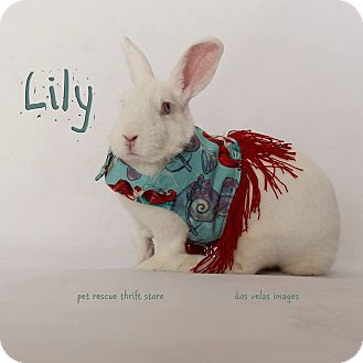 American Mix for adoption in Riverside, California - Lilly