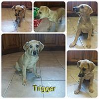 Adopt A Pet :: Trigger meet me 1/20 - Manchester, CT