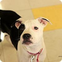 Adopt A Pet :: Bonnie - Flushing, MI