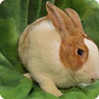 Adopt A Pet :: Kirk - Evansville, IN