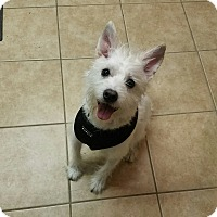 Adopt A Pet :: Dusty - Sharon, CT