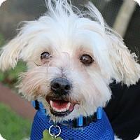 Adopt A Pet :: Baxter - La Costa, CA