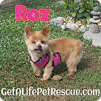 Adopt A Pet :: Roz - Wellington, FL