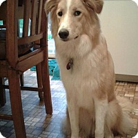 Adopt A Pet :: Ginger - Wytheville, VA