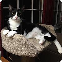 Adopt A Pet :: Simon - Athens, GA