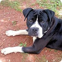 Adopt A Pet :: Kane - Rutherfordton, NC