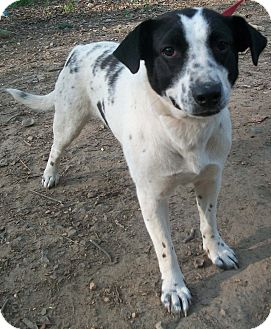 Border Collie Mix Dog for adoption in Harrisonburg, Virginia - Jazzy (Reduced Adoption Fee)