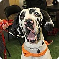 Adopt A Pet :: Sarge - Morgantown, WV