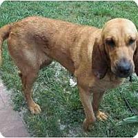 Adopt A Pet :: Jed - Carrollton, GA