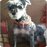Adopt A Pet :: Robbie - Rigaud, QC