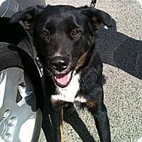 Adopt A Pet :: Ryder - Canoga Park, CA