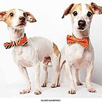 Adopt A Pet :: Bogard - New York, NY