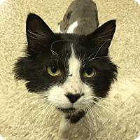 Adopt A Pet :: PePe - Medina, OH