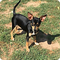 Adopt A Pet :: Dobby - Fort Valley, GA