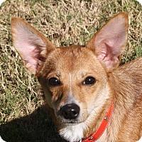Adopt A Pet :: Wanda - Edmonton, AB