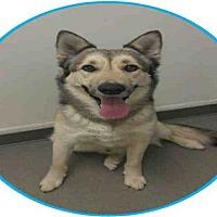 Adopt A Pet :: ZEEK - Bakersfield, CA