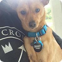 Adopt A Pet :: Fonzie - Springfield, MO