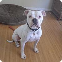 Adopt A Pet :: Tyson - Quail Valley, CA