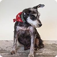Adopt A Pet :: Brooks - McKinney, TX