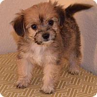 Adopt A Pet :: Herbs: Sage - Palo Alto, CA