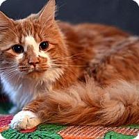 Adopt A Pet :: Geoff - Brooklyn, NY