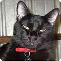 Adopt A Pet :: Jack Black - Pasadena, CA