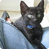 Adopt A Pet :: Franklin - Vero Beach, FL