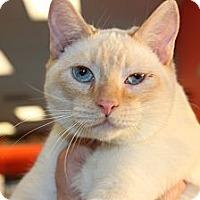 Adopt A Pet :: Lucas - Santa Monica, CA